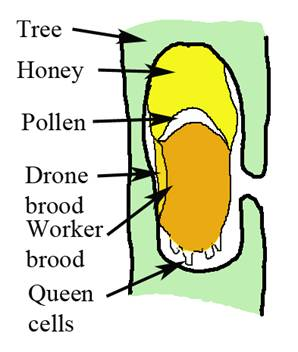 Anatomy of a beehive